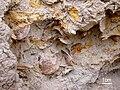 Fossil-ostreids.jpg