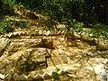 Fossil woods 2.jpg