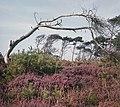 Fotothek df ld 0003089 001a Landschaften ^ Insellandschaften ^ Bäume.jpg