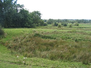 Frisby Marsh