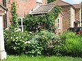 Front garden - Flickr - peganum (2).jpg