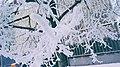 Frosty Tree Fingers (33268870375).jpg