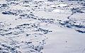 Frozen Humber River, 2010.jpg