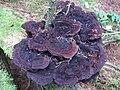 Fungi - geograph.org.uk - 567986.jpg