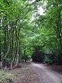 GOC Hoddesdon 050 Hertford Heath Nature Reserve (29113582570).jpg