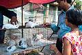 Galiff Street Bird Market1.jpg