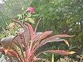 GardenHome.jpg