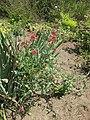 Gardenology-IMG 7898 hunt10aug.jpg
