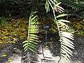 Gardenology.org-IMG 4176 hunt0904.jpg