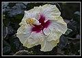 Gardens by the Marina Bay - Dome Flowers-07 (8323765556).jpg