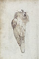 Gelderland1601-1603 Alectroenas nitidissima2.jpg