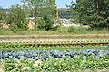 Gemüsefeld, Bäume und Baustelle 2.JPG