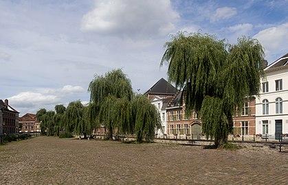 Gent, bomen langs de Lievekaai IMG 0754 2021-08-15 14.55.jpg