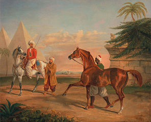Mameluke purchasing an Arabian stallion