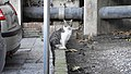 Gibraltar Cat (30DEC17) (3).jpg