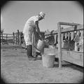 Gila River Relocation Center, Rivers, Arizona. Y.T. Sakoda, former vegetable worker from Guadalupe, . . . - NARA - 537090.tif