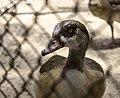 Giza Zoo 03.jpg