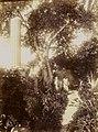 Gloeden, Wilhelm von (1856-1931) - n. 1810 - Auch ich in Arkadien, p. 103, cm 16,9 x 22,4, dated 24-07-1910.jpg