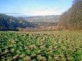Grassland and woodland on Dumbleton Hill - geograph.org.uk - 1672345.jpg