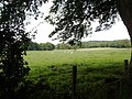 Grazing Field, from a shady lane - geograph.org.uk - 498862.jpg