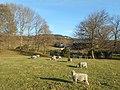 Great Tottington Farm 02.jpg