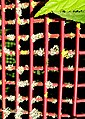 Grid and lichen - Flickr - Stiller Beobachter.jpg