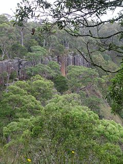 Guy Fawkes River National Park Protected area in New South Wales, Australia