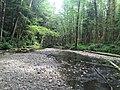 Haans Creek - Haida Gwaii (26990209240).jpg