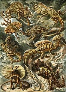 Gravura do livro Kunstformen der Natur