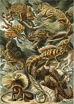 """Lacertilla"", from Ernst Haeckel's Artforms  ᎤᏁᎳᏅ ᎤᏬᏢᏅ, 1904"