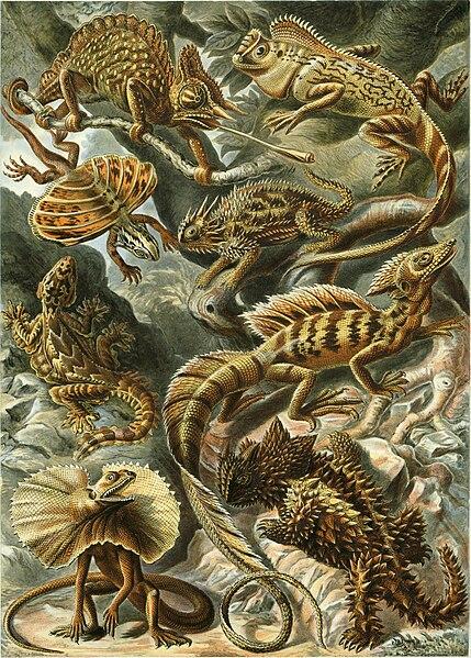 Файл:Haeckel Lacertilia.jpg