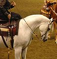 Half Arabian Ladies Western Sidesaddle (2669573412).jpg