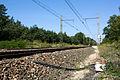 Halte Fontainebleau - Forêt IMG 8524.jpg