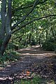 Hampstead Heath - geograph.org.uk - 1005710.jpg
