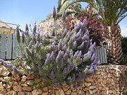 Har Adar flowers