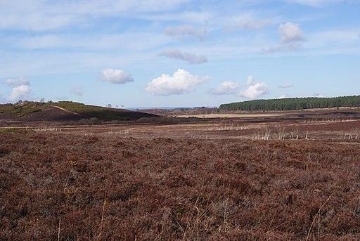 Hartland Moor National Nature Reserve - geograph.org.uk - 1757696