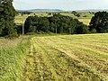 Hay-meadow above Bishop's Bridge - geograph.org.uk - 204018.jpg