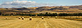 Hay Bales in North Canterbury.jpg