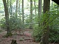 Heath End wood at Checkendon, Oxfordshire 2.jpg