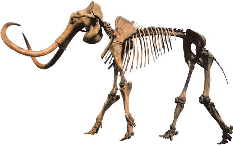 File:Hebior Mammoth Clean.png