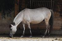 Heck horse munich.JPG