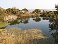 Hidden reservoir - geograph.org.uk - 1235565.jpg