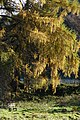 Highlands - panoramio (24).jpg