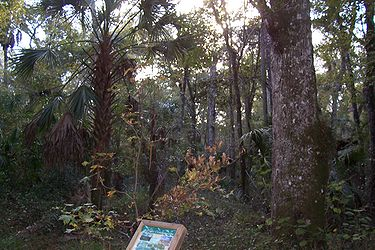 Hillsborough River State Park 7.jpg
