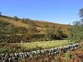 Hillside near Tarras Lodge - geograph.org.uk - 574171.jpg