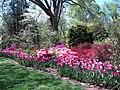 Hillwood Gardens in April (16975225524).jpg