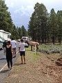 Hirsche Im Yosemite National Park (125419201).jpeg