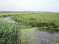 Horse Eye Sewer - geograph.org.uk - 1372463.jpg