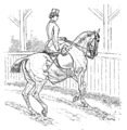 Horsemanship for Women 086.png