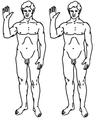 Human clones.png